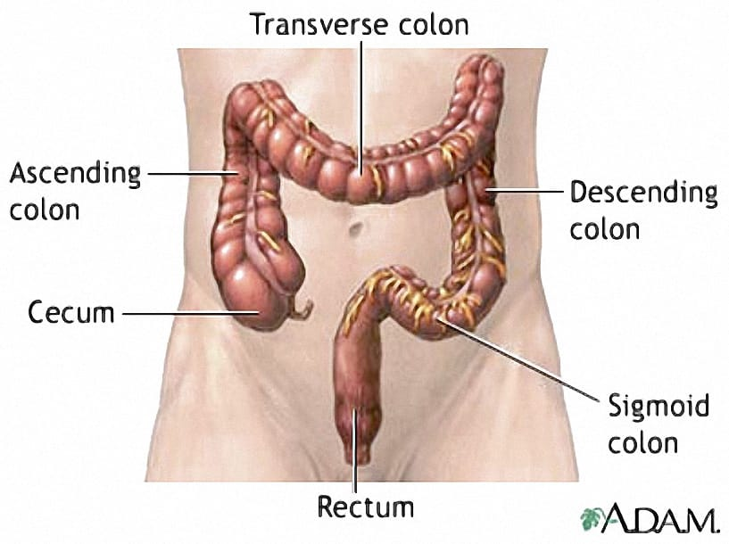 Colon Location Diagram All Kind Of Wiring Diagrams