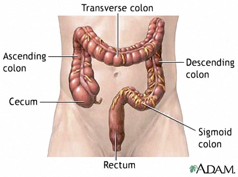 Colon Diagram 2 Oxford Colon Cancer Trust
